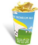 ifungi home grow your own yellow oyster mushroom