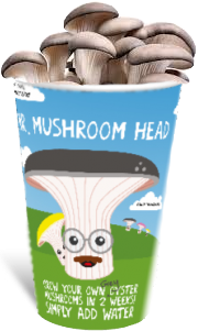 ifungi home grow your own grey oyster mushroom