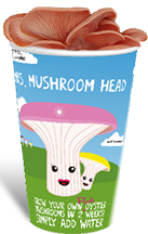 ifungi home grow your own pink oyster mushroom